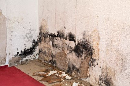 Mold Detection Services By Tri State Flood Inc